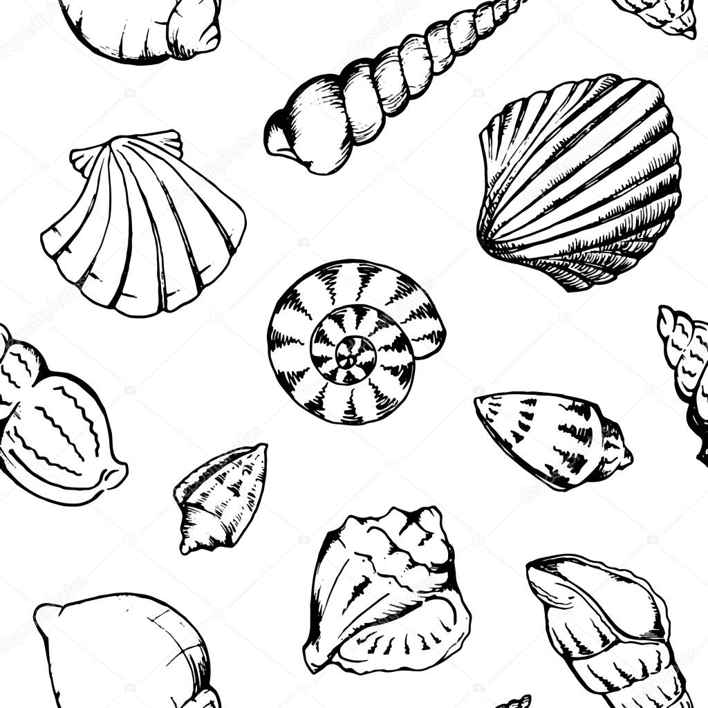 Shell Clipart