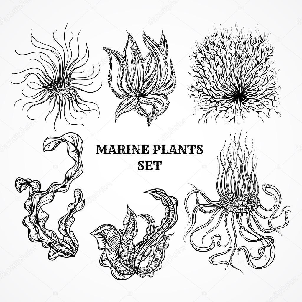 Collection De Plantes Marines Des Feuilles Et Des Algues