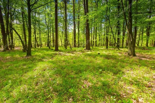 Прекрасный зелёный весенний лес — Стоковое фото © Milosz ...