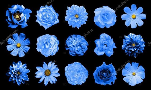 自然とシュールな青い花 15 の 1 のコラージュをミックス: ダリア、サクラソウ、多年生のアスター、デイジーの花、バラ、牡丹黒に分離 — ストック写真