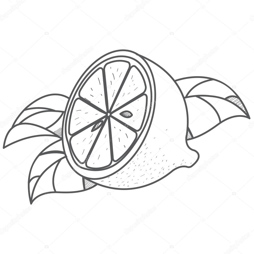 Half Of Lemon Logo Half Of Lemon Logo Outline Drawing Of