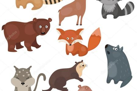 Picture Of Different Animals And Their Names What Do These Mean Boldsky Com The Owl House