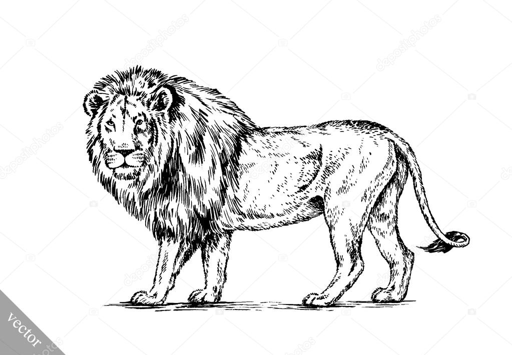 Áˆ Outline Lion Stock Drawings Royalty Free Lion Outline Pictures Download On Depositphotos
