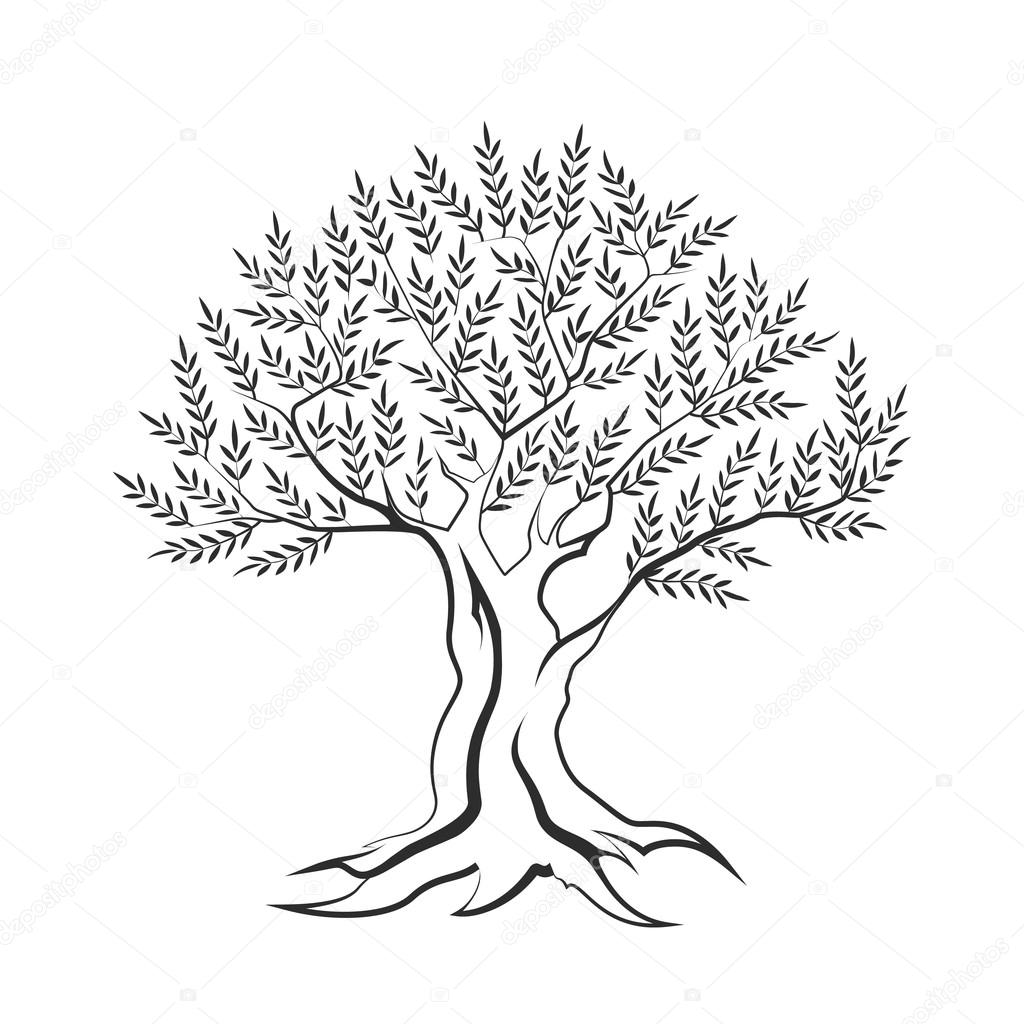 Olive Tree Outline Silhouette Icon Isolated On White