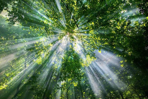sun rays through the trees — Stock Photo © Kateryna ...