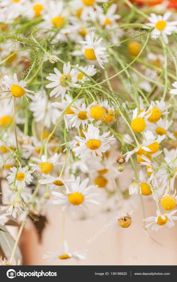 Букет кошачьих цветов — Стоковое фото © Shebeko #136186620