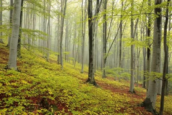 Фото весенний лес. Очарованный весенний лес — Стоковое ...