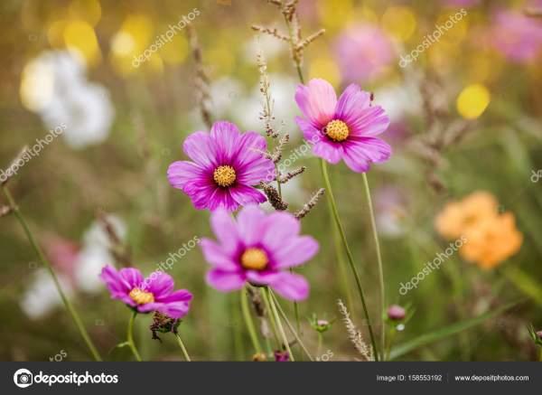 Полевые цветы на лугу — Стоковое фото © dvoevnore #158553192