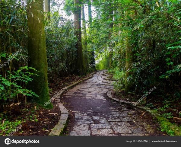 Красивые камнями путь внутри леса в Хаконе
