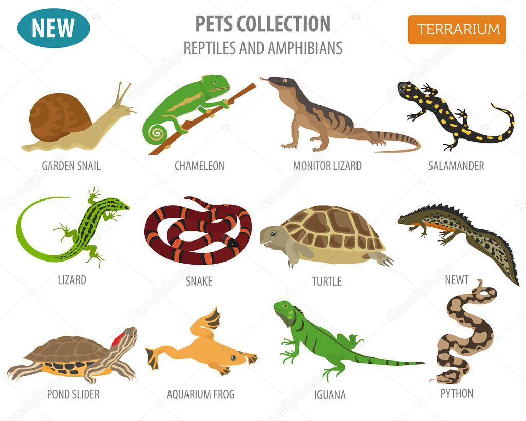 Fotos Anfibios Y Reptiles