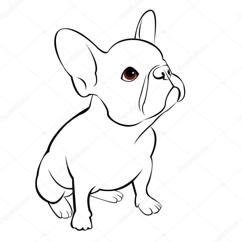 Pies Wektor Zwierz Francuski Ilustracja Zwierz Tom