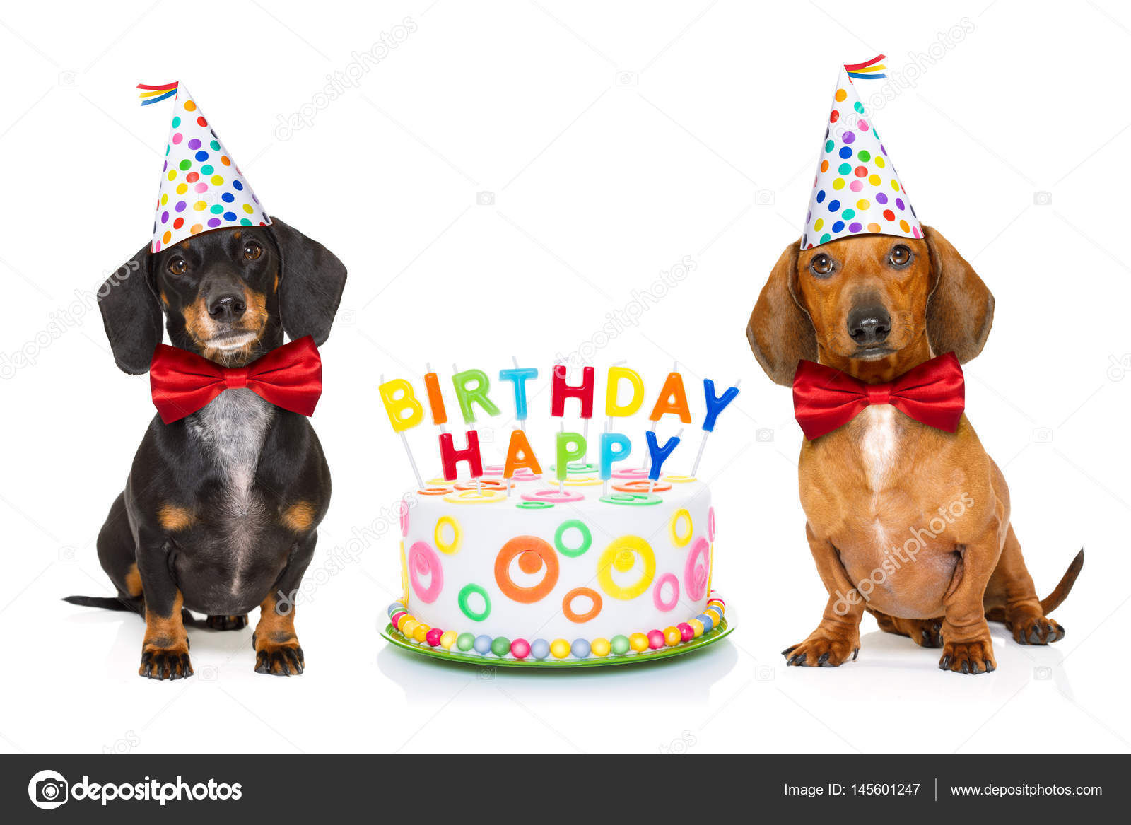 Happy Birthday Wishes Dog Lovers
