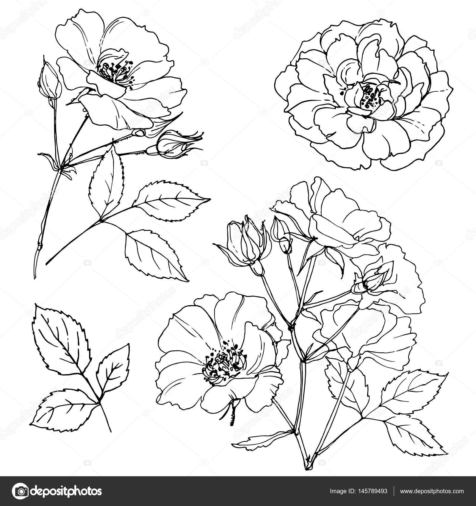 Beautiful Hand Drawn Flowers