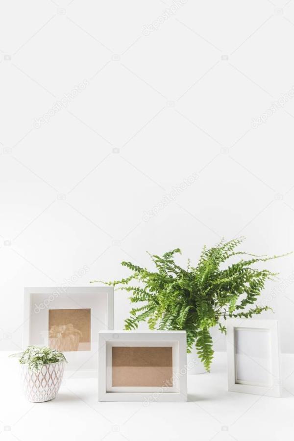 Красивые Зеленые Горшечные Растения Пустые Рамки ...