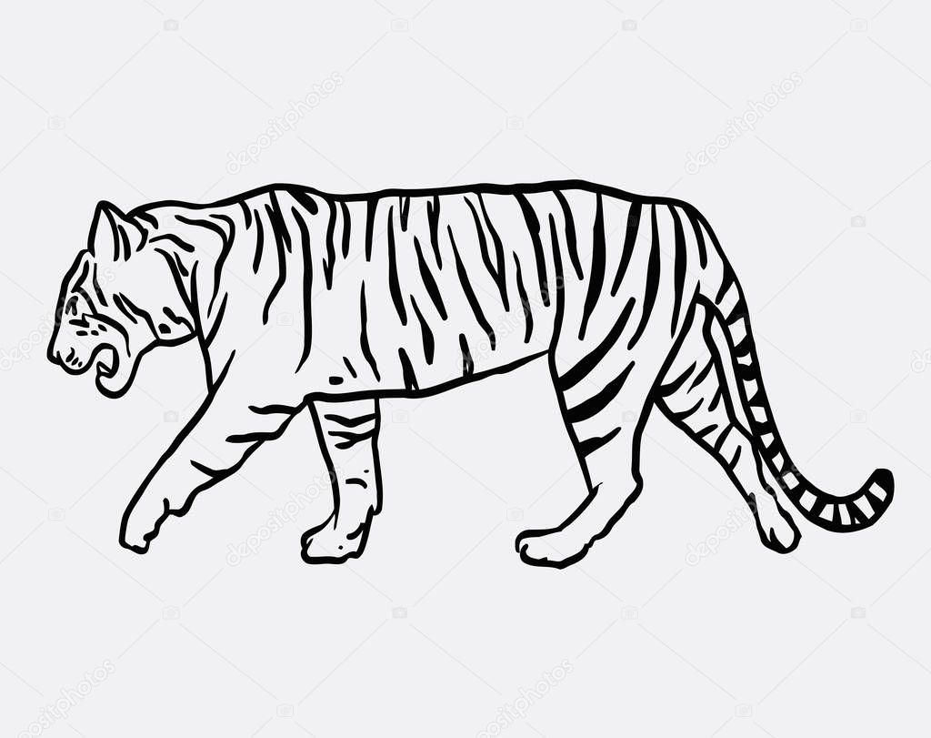 Vector Dibujo Tigre