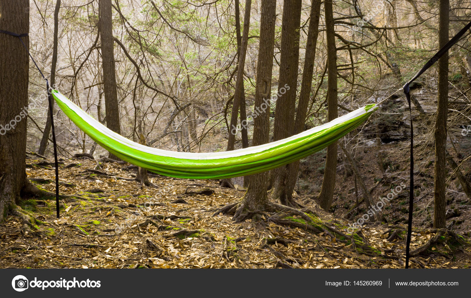 Hanging Hammock In The Trees