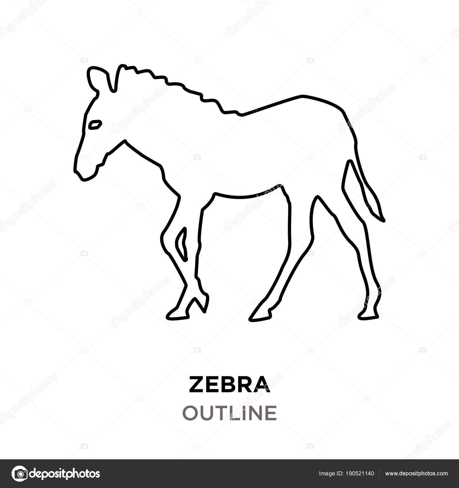 Zebra Images Outline