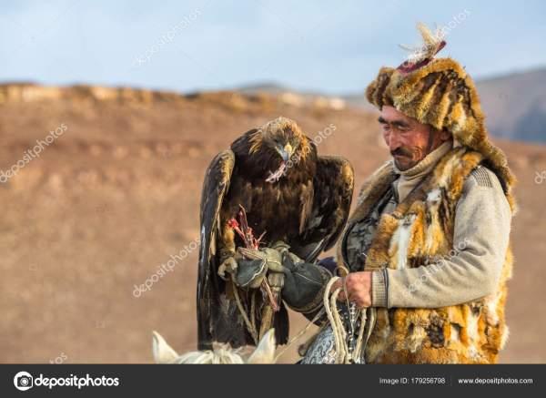 Сагсай Монголия Сентября 2017 Года Казахский Охотник Орла ...