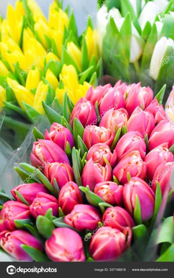 Продаю свежие тюльпаны. Букет весенних цветов. Цвета ...