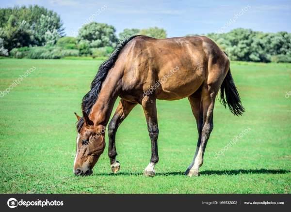 Красивая лошадь пасется на зеленые пастбища. — Стоковое ...