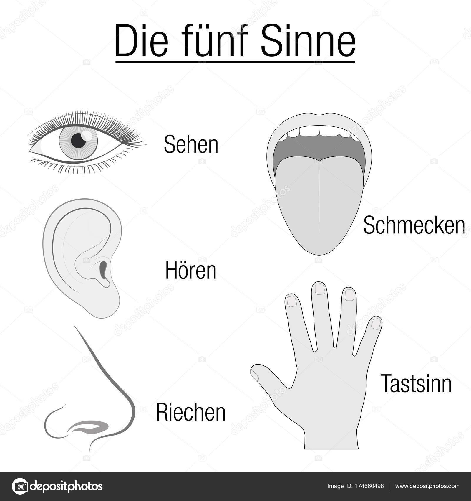 Funf Sinne Sinnesorgane Deutsche Chart