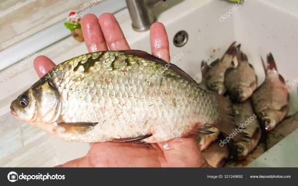 Речная рыба в раковине. Свежая рыба красивая рыба близко ...