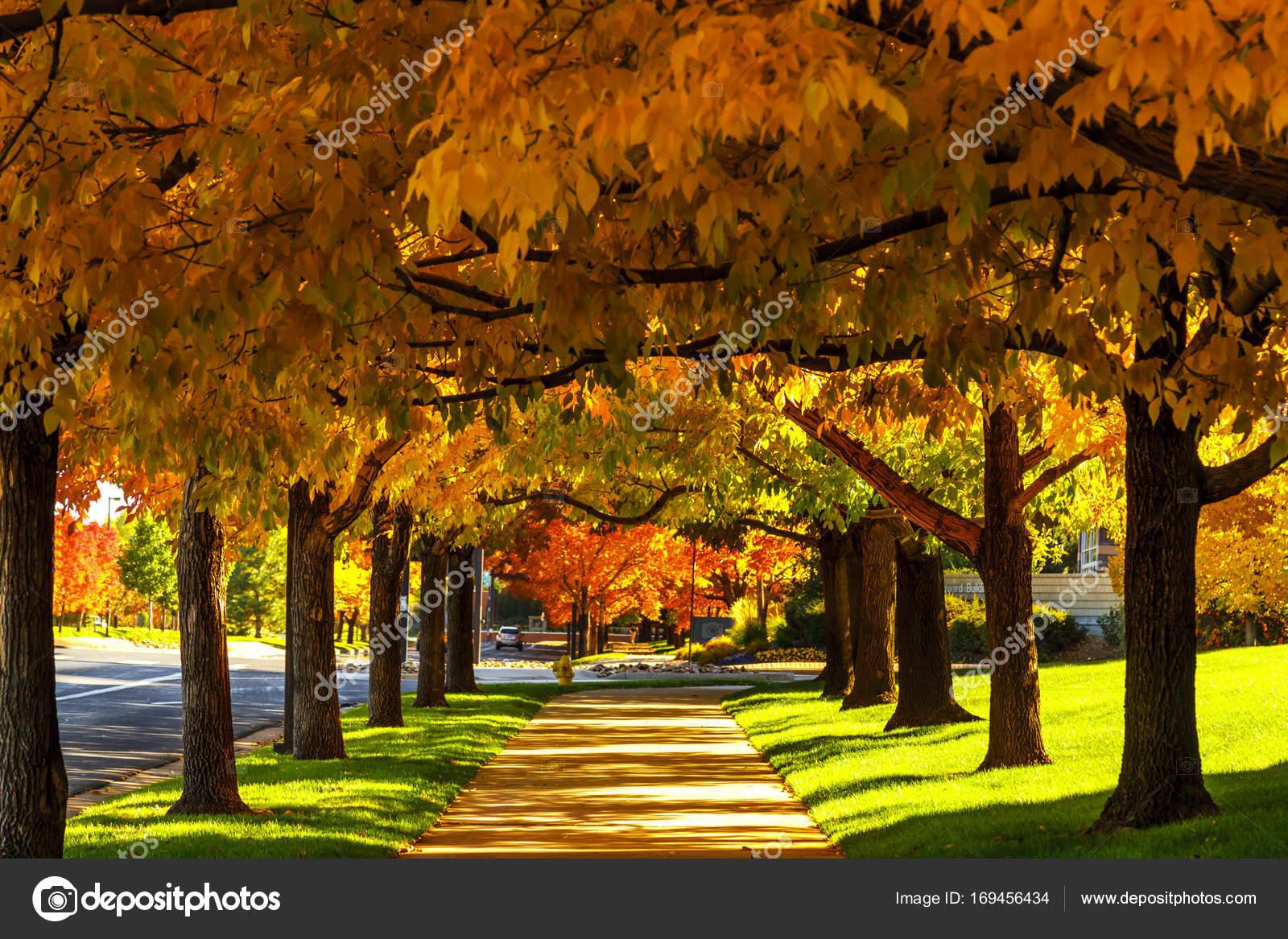 Fall Colors In Denver Colorado Tech Center