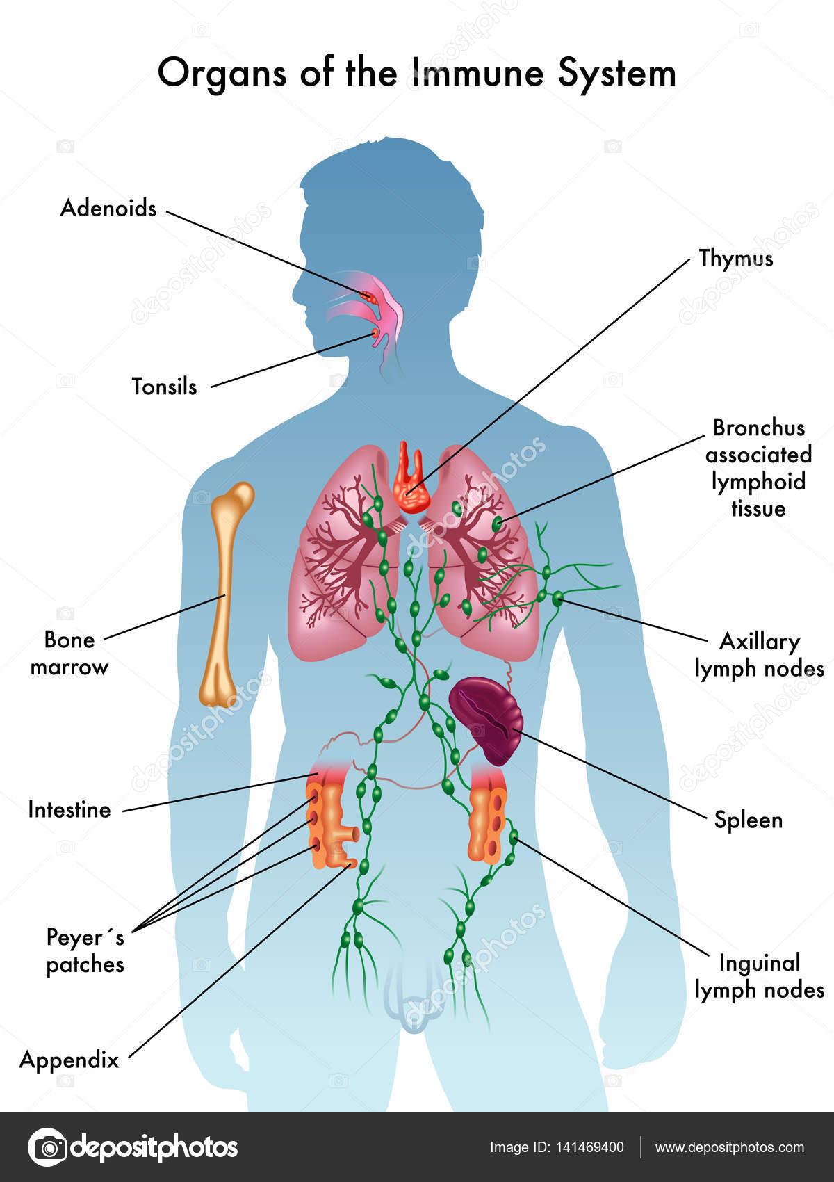 Download Comprehensive Bioactive Natural Products Volume 5 Immune Modulation Vaccine Adjuvants