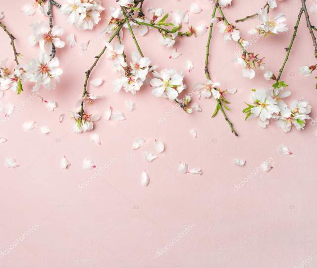 Spring Floral Background Texture Wallpaper White Almond Blossom Flowers Petals Stock Photo