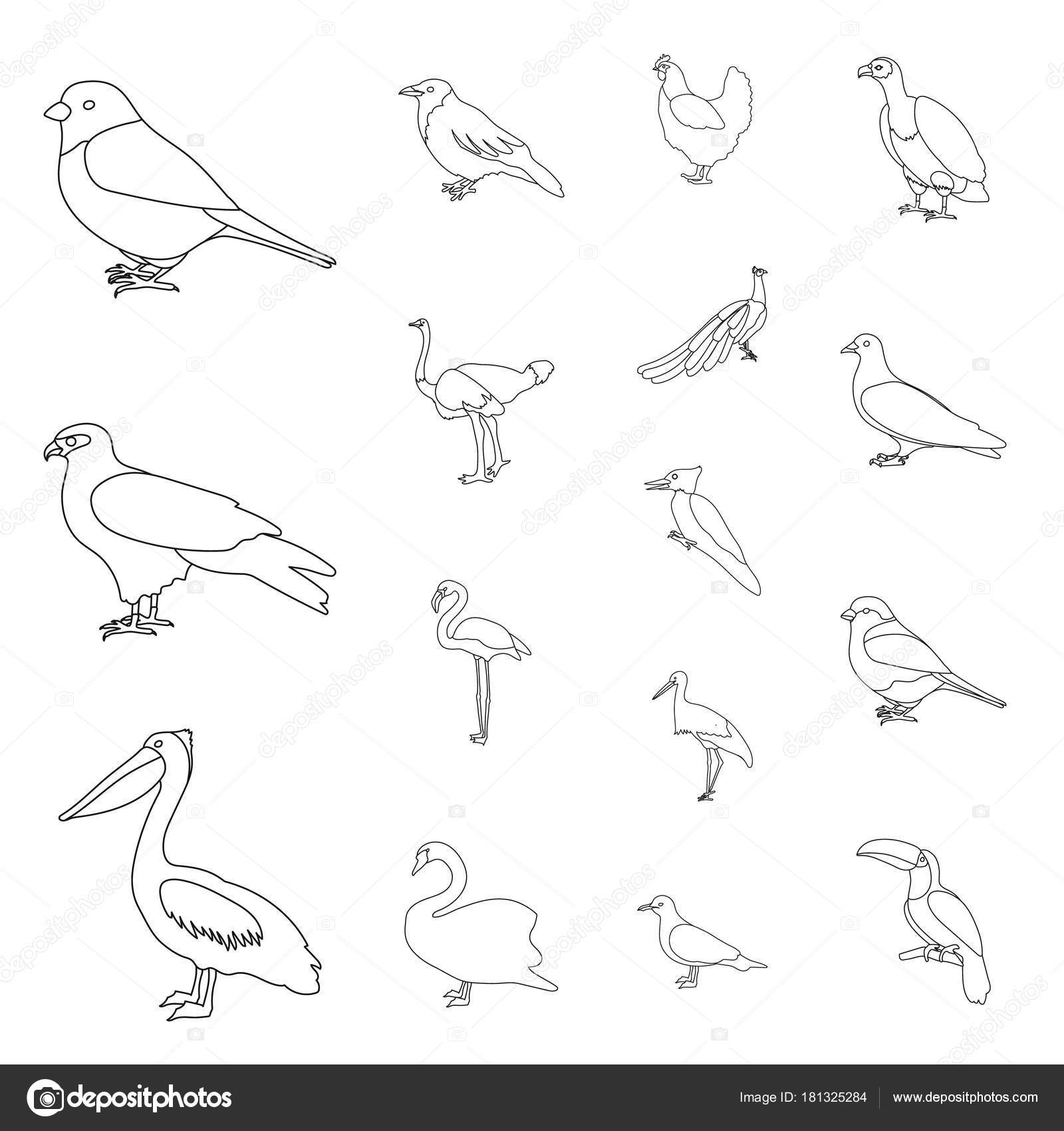 Types Of Birds Outline Icons In Set Collection For Design