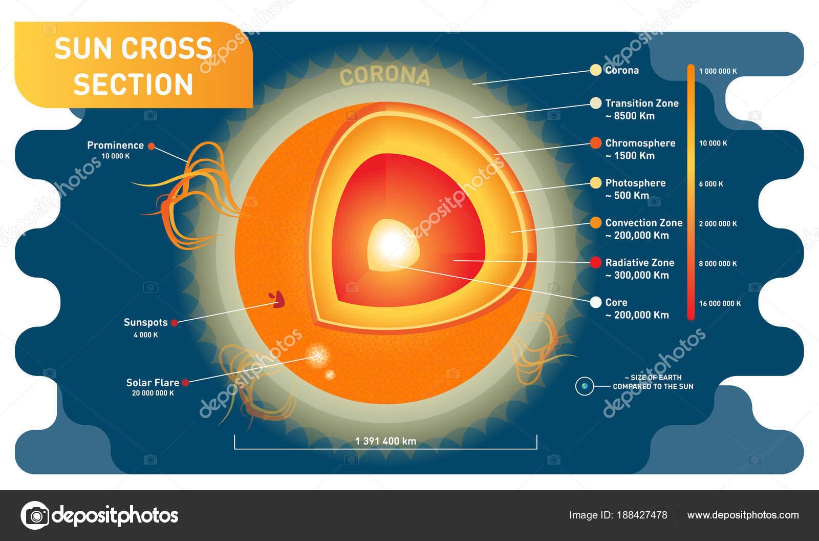 Zon Cross Sectie Wetenschappelijke Vector Illustratie
