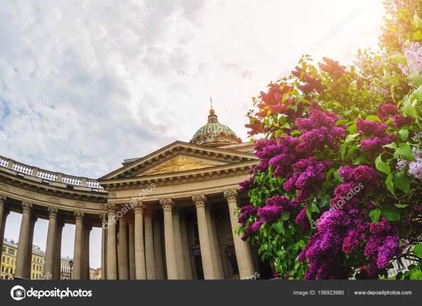 Казанский собор в Санкт-Петербурге летом Сирень — Стоковое ...