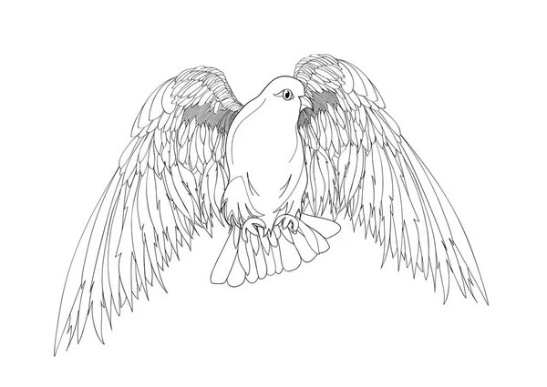 Нарисованные голуби. Нарисованный голубь — Векторное ...