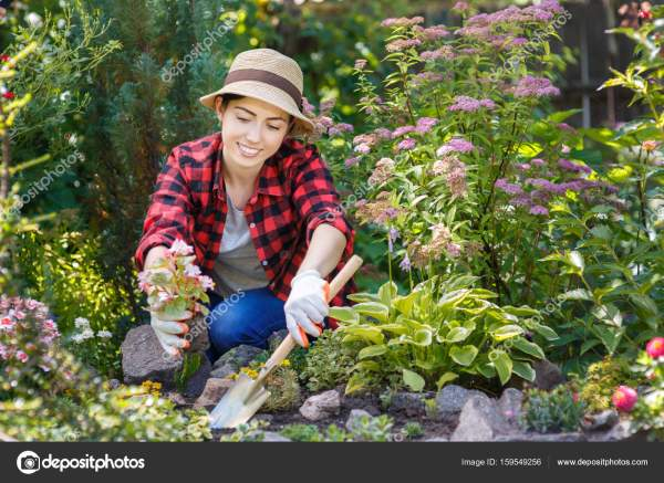 женщина садовник посадка цветов Стоковое фото
