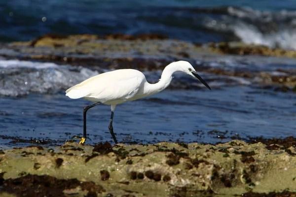 Картинки фауна средиземного моря, Стоковые Фотографии и ...