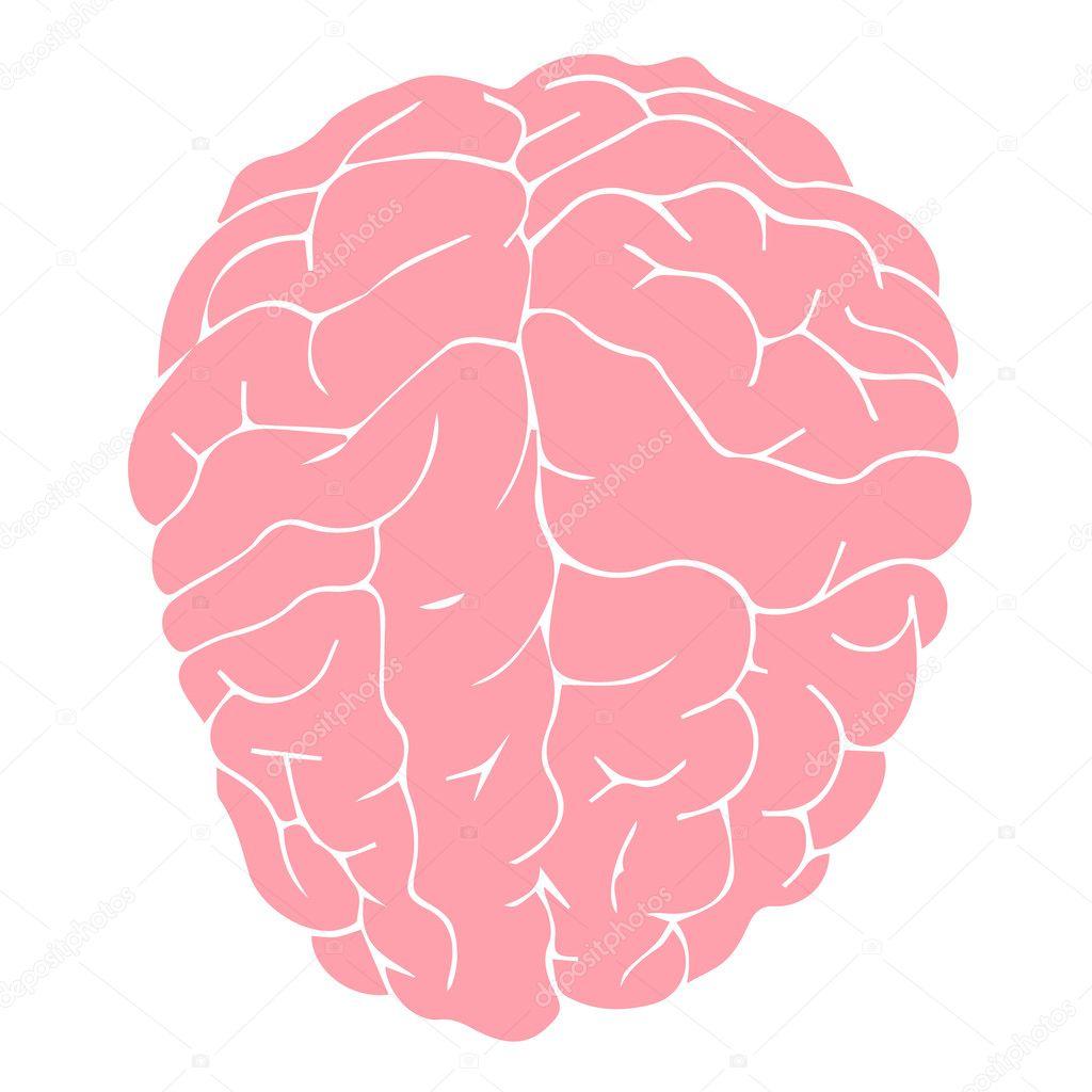 Brain Vector Brain Illustration Brain Medical Brain