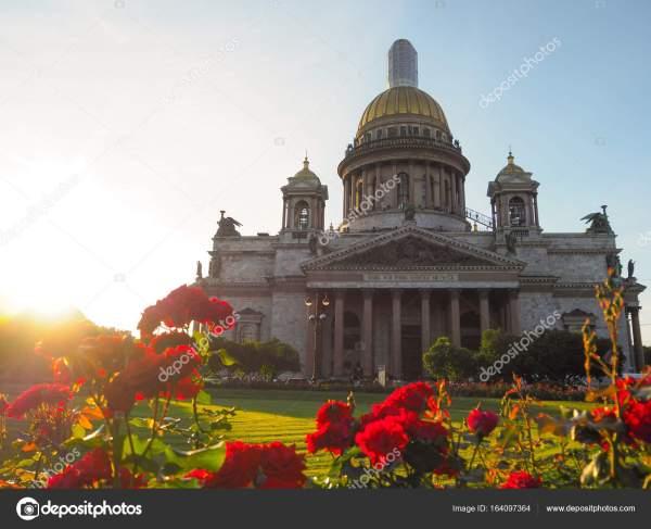 Лето осень в Санкт-Петербурге. Цветущие розы в вечерние ...