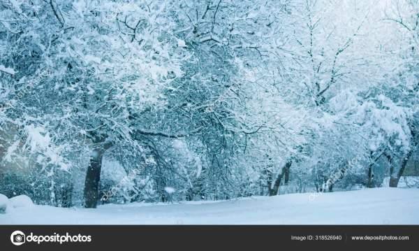 Снегопад Улицы Города Деревья Покрыты Снегом Синий Зимнее ...