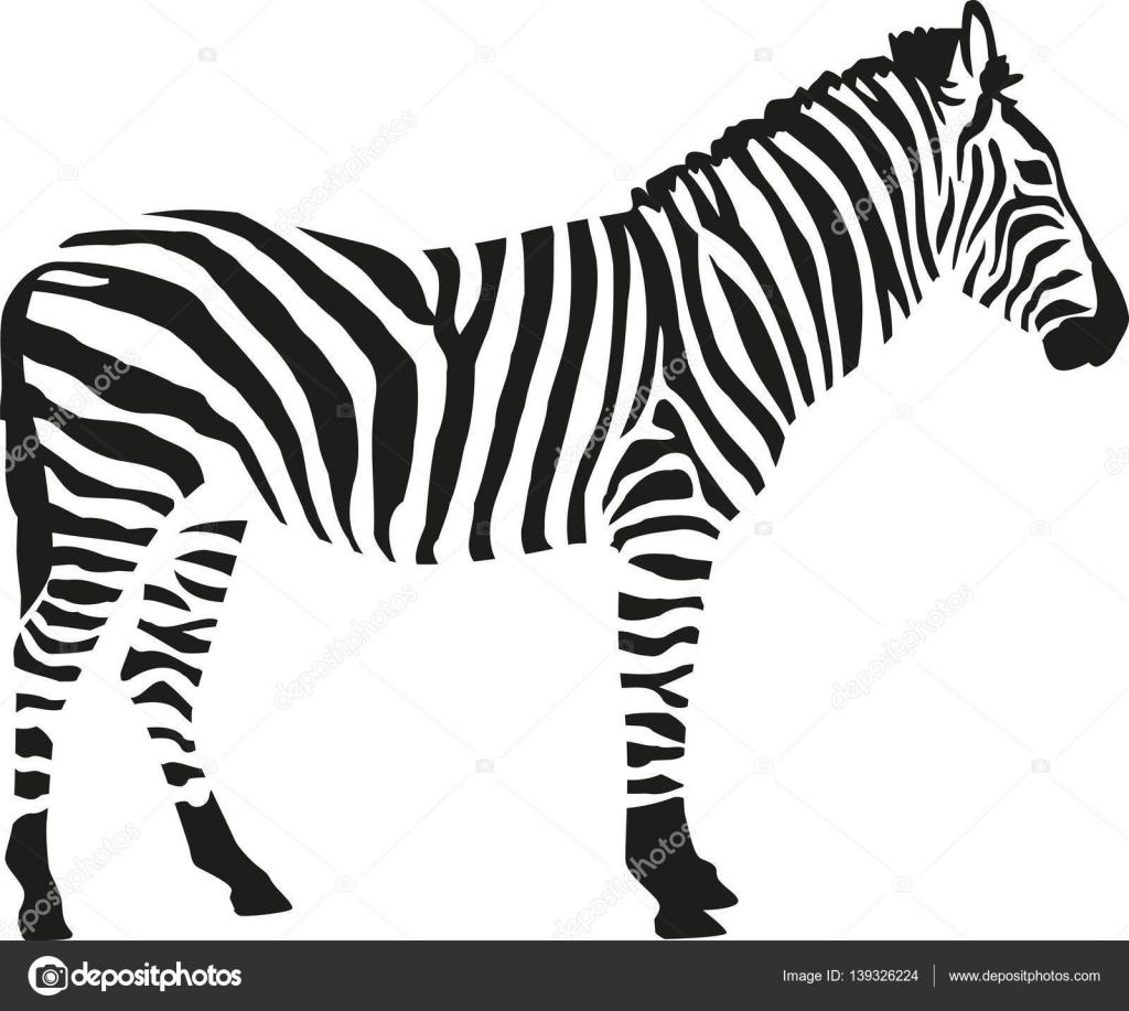 Silhouette De Zebre Isloated Sur Fond Blanc