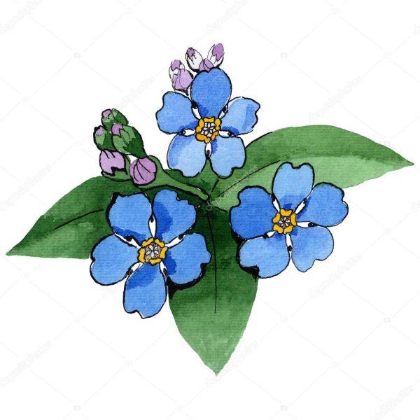 Уайлдфлауэр Незабудка цветок в стиле акварели ...