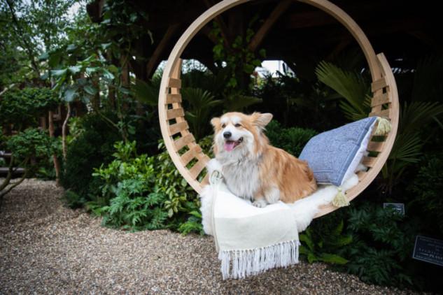 El lugar perfecto para la mascota