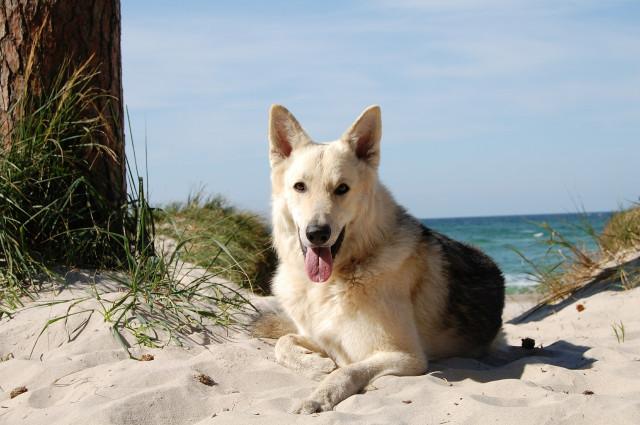Livorno: la destinazione per cani esigenti