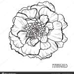 Decorative Marigold Flower Design Element Can Used Cards Invitations Banners Vector Image By C Chantall Vector Stock 214182030