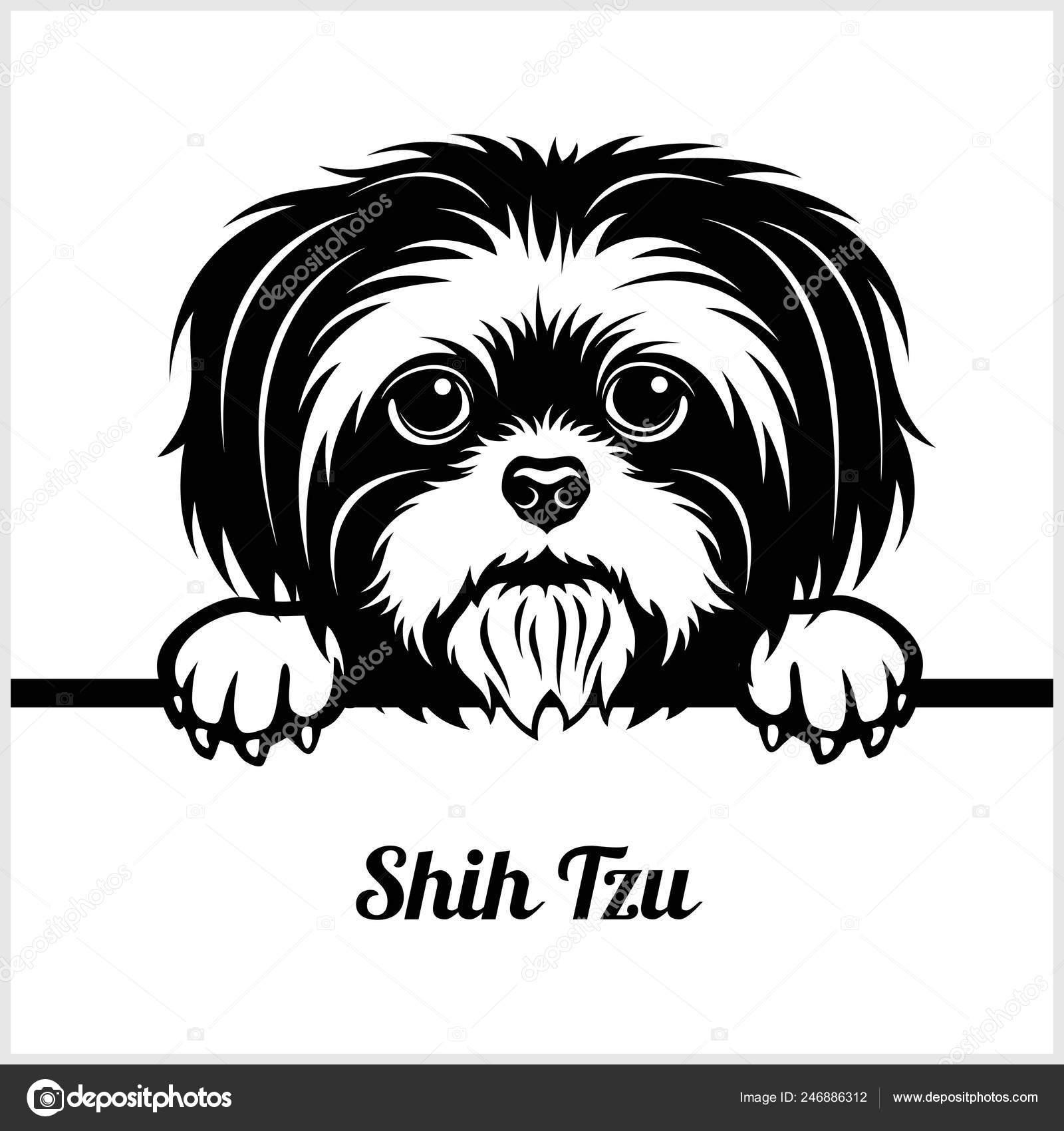 Pics Shih Tzu Shih Tzu
