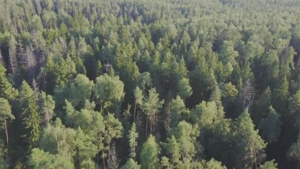 Vy över en vinter skog med snö. Taiga Skog Stockvideor Royaltyfria Taiga Skog Filmer Depositphotos
