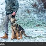 German Shepherd Puppy Training At Winter Stock Photo C R3dsnake 248184084