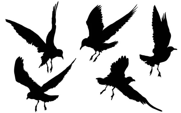 Seagulls Birds Flying Drawing Vector Illustration Stock Images Page Everypixel
