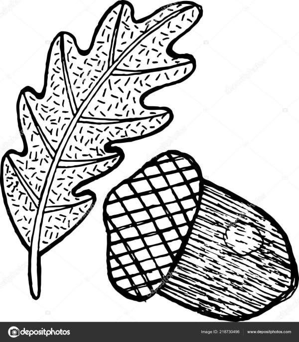 acorn coloring page # 44