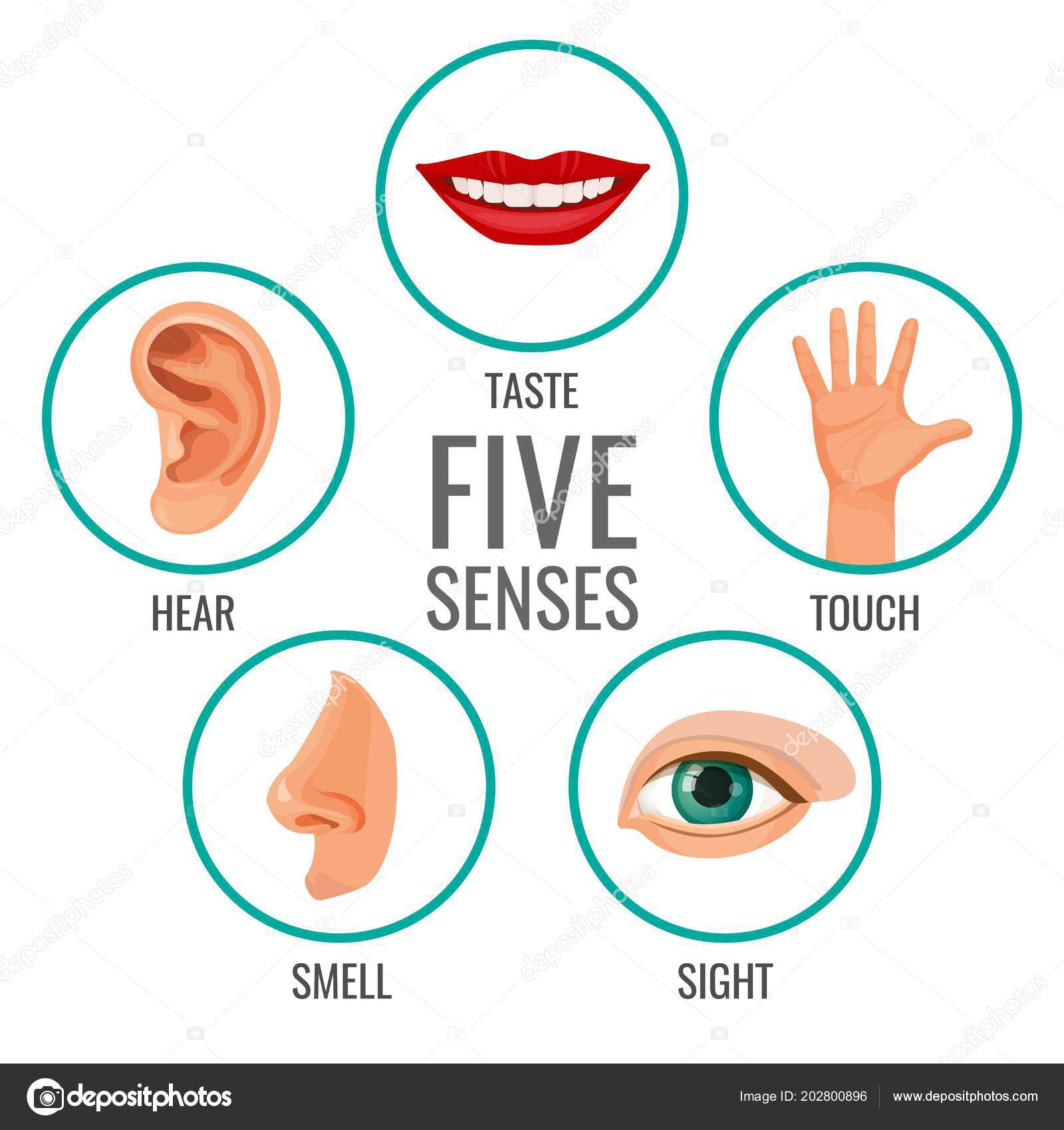 Other Than The Basic Five Senses Human Also Has Senses Such As