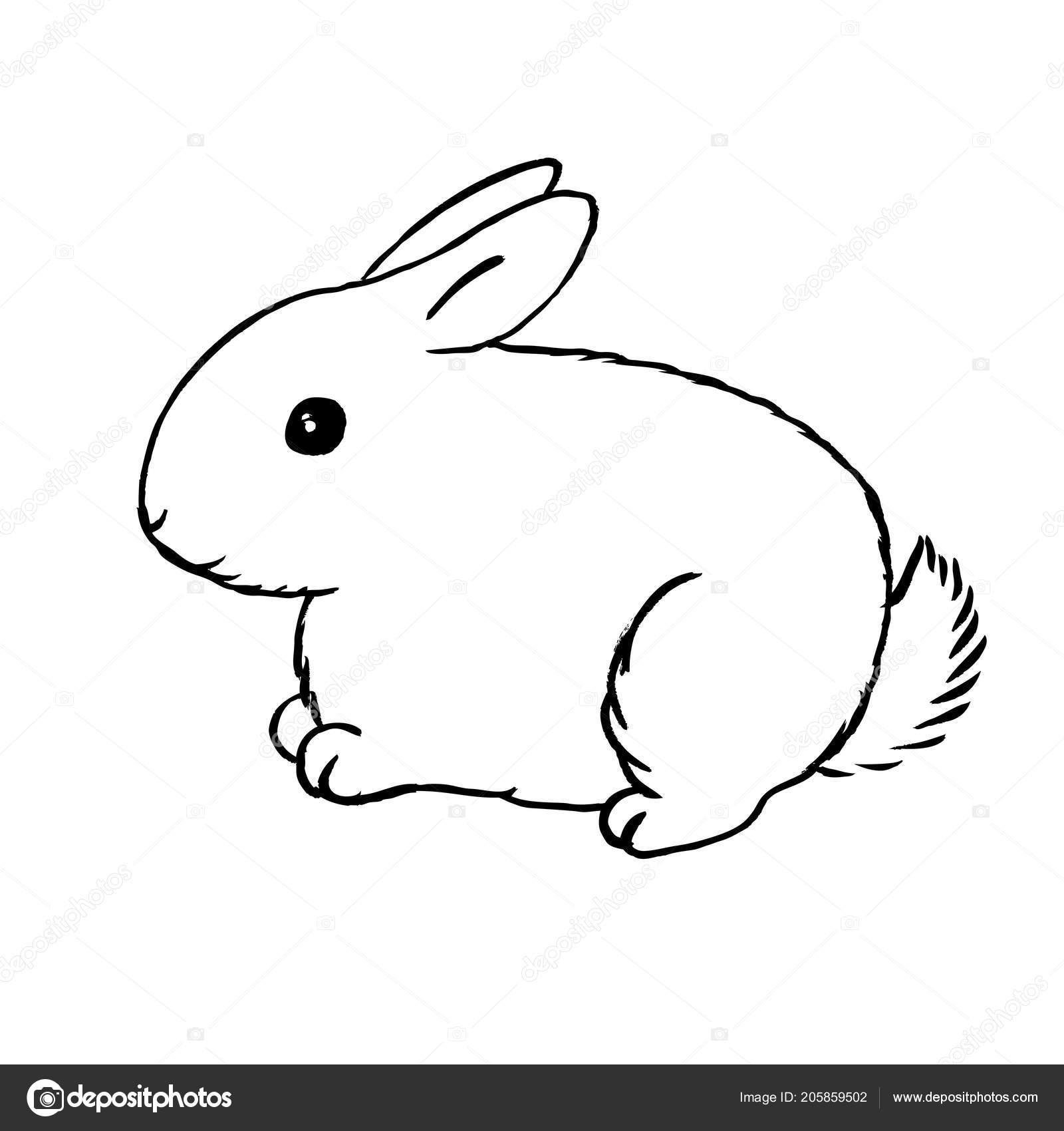 Esquema Conejo Liebre Blanca Peluda